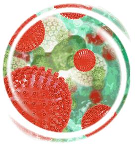 Herpes Viren in 3d Gürtelrose besprechen